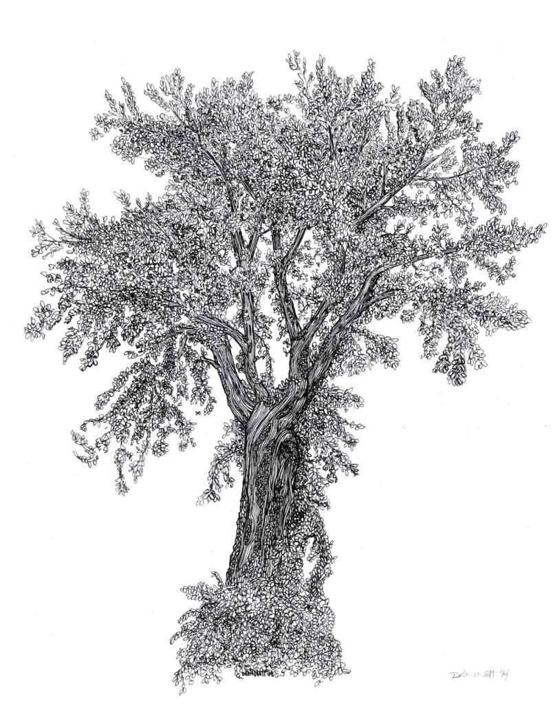 Dan Nott tree drawing
